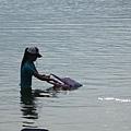 粉紅dophin與工作人員