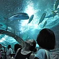 underwater水族館-超夢幻