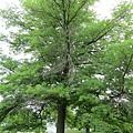 像假的樹...超美的!