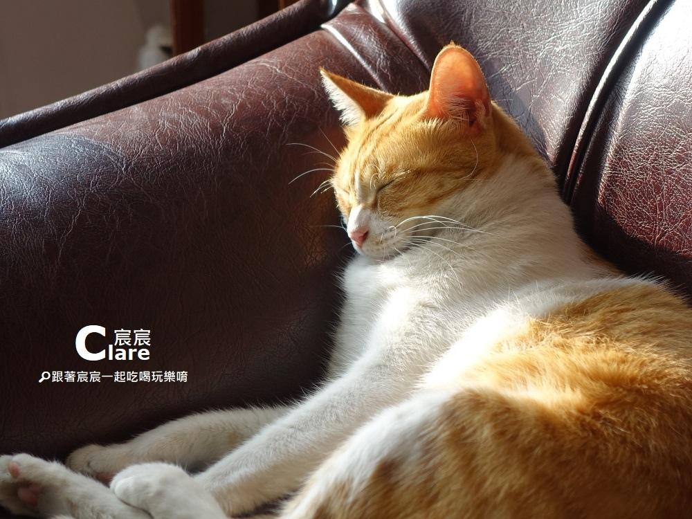 店貓奶茶2-立賀佇遮-台南新化老街美食.JPG