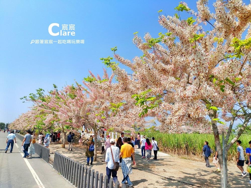 台南旅遊景點推薦-西港花旗木步道1.jpg