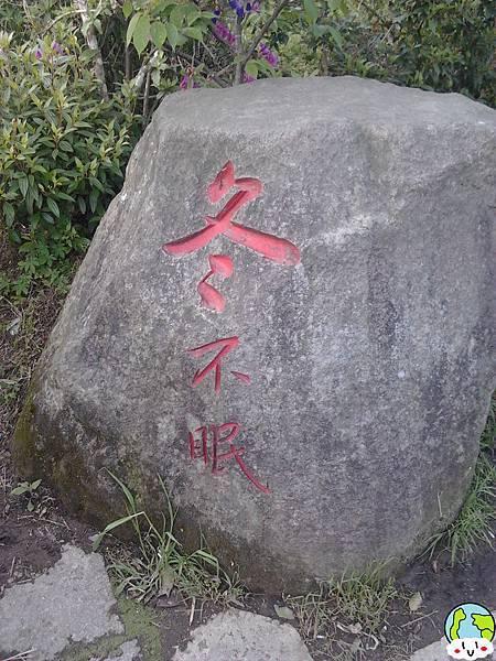 陽明山海芋