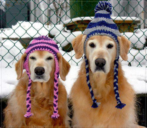狗狗帶頭巾