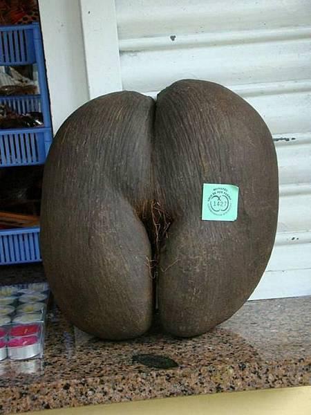 像屁股的椰子