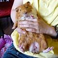 多羅帥鼠~