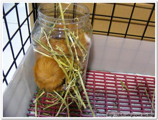 罐裝米漿2010