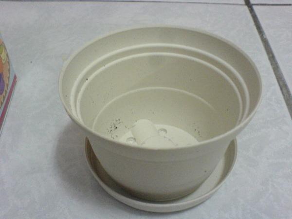 咖啡杯小花盆.JPG