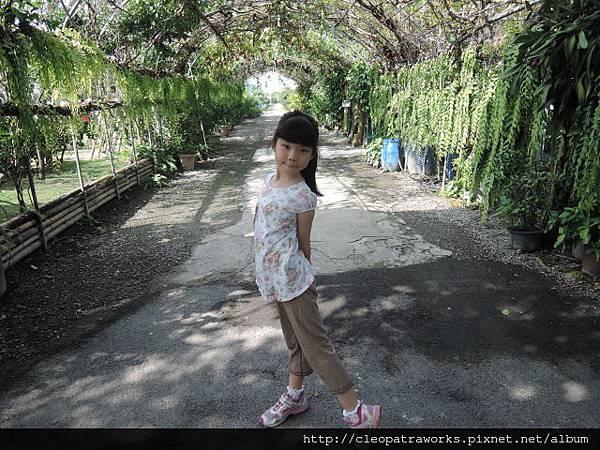 劍門生態花果園24