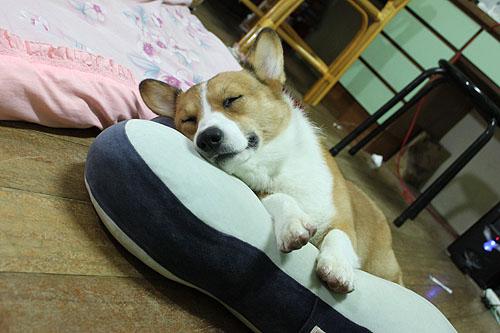 睡姿超可愛.jpg
