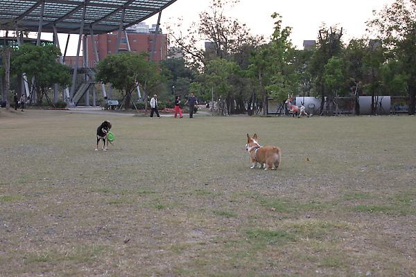 小毛與新朋友2.jpg