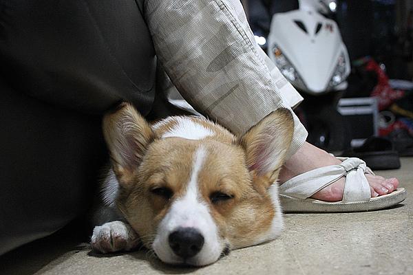 在大姊腳邊睡覺.jpg