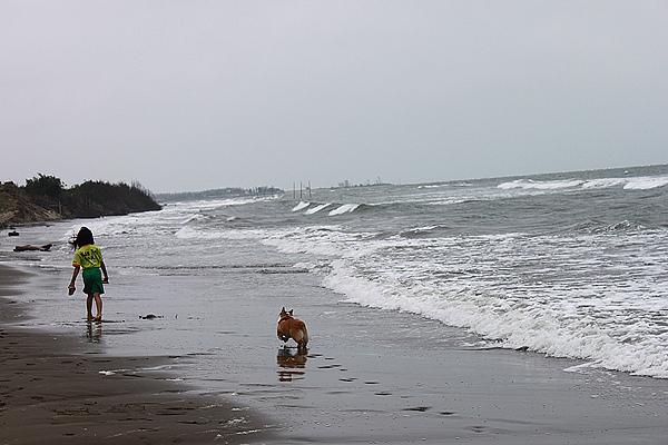 在沙灘上奔跑的小毛.jpg
