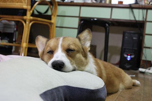 這個枕頭好舒服.jpg