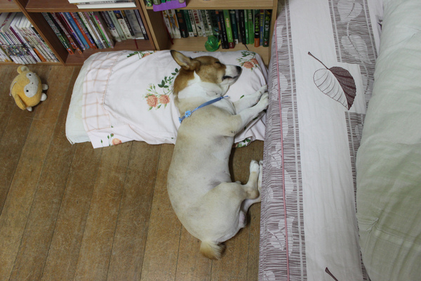 枕頭睡起來舒服嗎.jpg