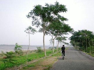 鳳凰林綠廊