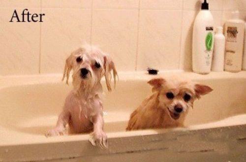狗狗洗澡後.jpg
