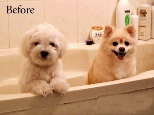 狗狗洗澡前.jpg