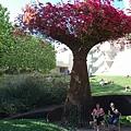 蓋帝中心花園--九重葛