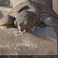 聖家堂--誕生之門(高第的作品)陸龜