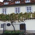 400歲葡萄藤