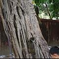孔廟內的松鼠