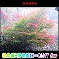 IMG_2641.jpg
