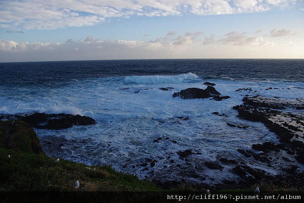 菲利普島--海豹岩