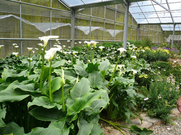 梅峰農場花圃