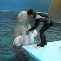 海生館小白鯨