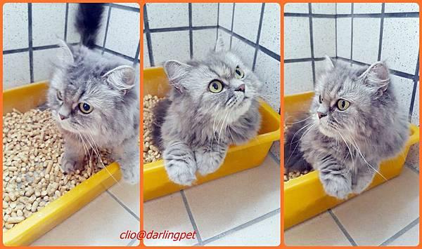 1cats.jpg