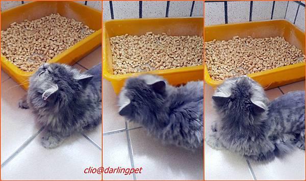 2cats.jpg