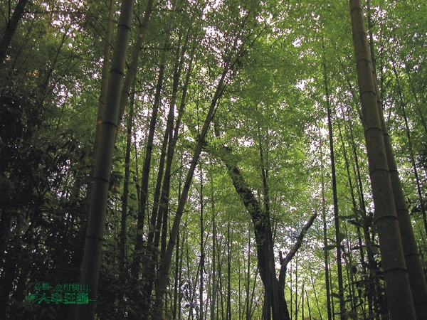 必勝登山-金甘樹山-18.jpg