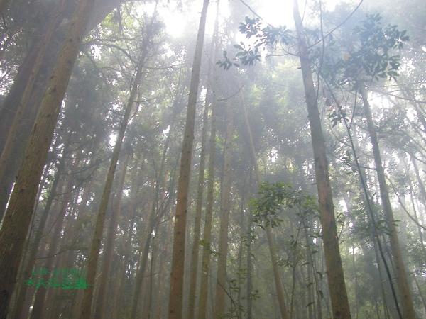 必勝登山-金甘樹山-20.jpg