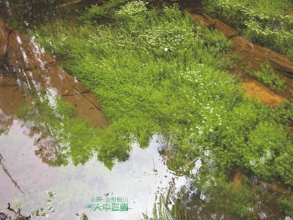 必勝登山-金甘樹山-15.jpg