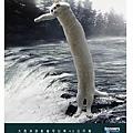 大西洋的長貓.jpg