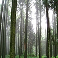 穿透林間的陽光
