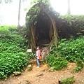 巨大的樹洞