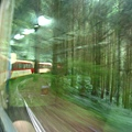 穿梭林間的小火車