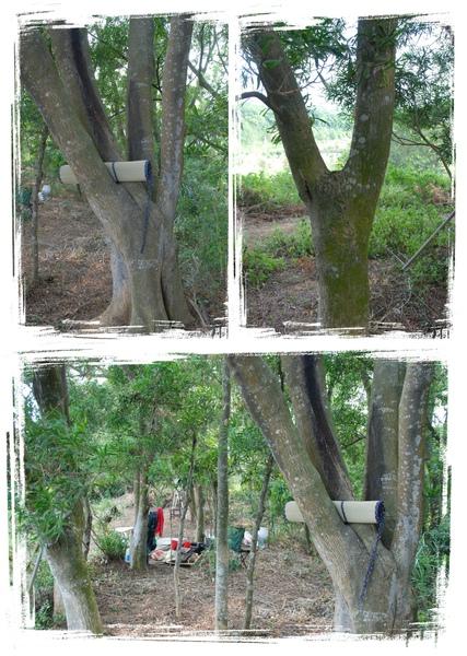 森林05.jpg