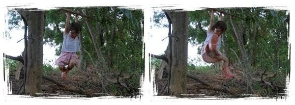 森林12.jpg