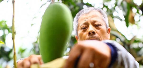 八八水災對六龜農業造成空前破壞,六龜農民愈挫愈勇,不退反進,有意採行友善環境的農法生產安全無毒的農產品(3)
