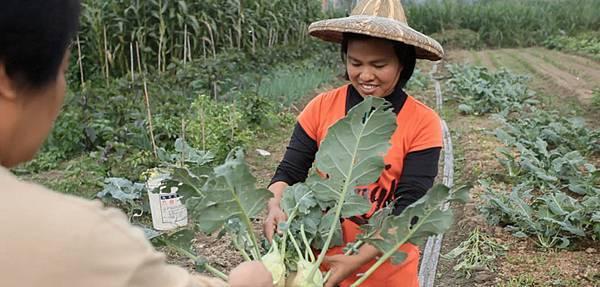八八水災對六龜農業造成空前破壞,六龜農民愈挫愈勇,不退反進,有意採行友善環境的農法生產安全無毒的農產品(2)
