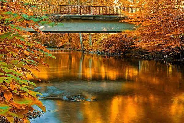 從初秋到深秋,維美愛情片中最愛的秋楓景色就是這個…
