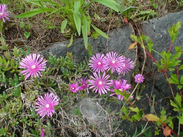 石縫間的小花