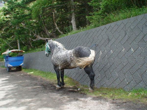 駿馬--體力較差的人的選擇