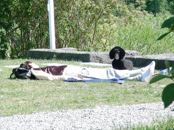 守候著享受陽光主人的小貴賓狗