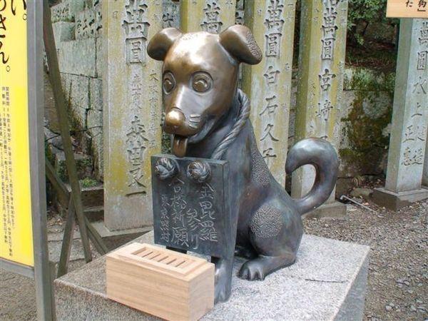 269合格犬.JPG