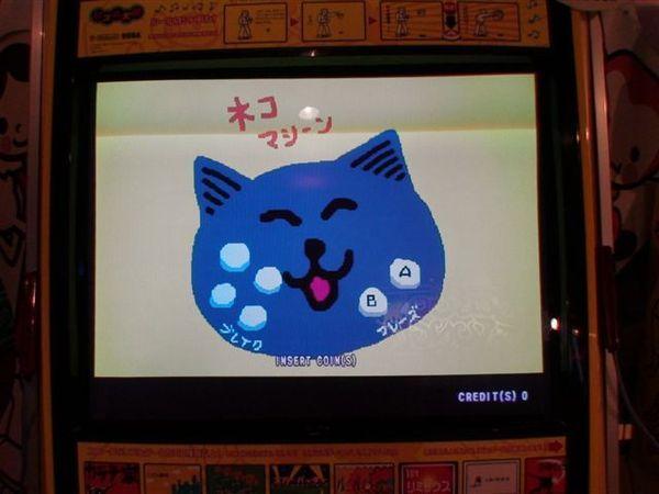 617可愛貓.JPG