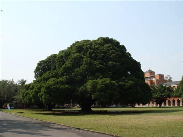 榕園-國泰建設認養作為他們的精神標誌