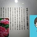 DSC_3966.JPG